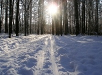 1251899_trails_to_the_sun.jpg