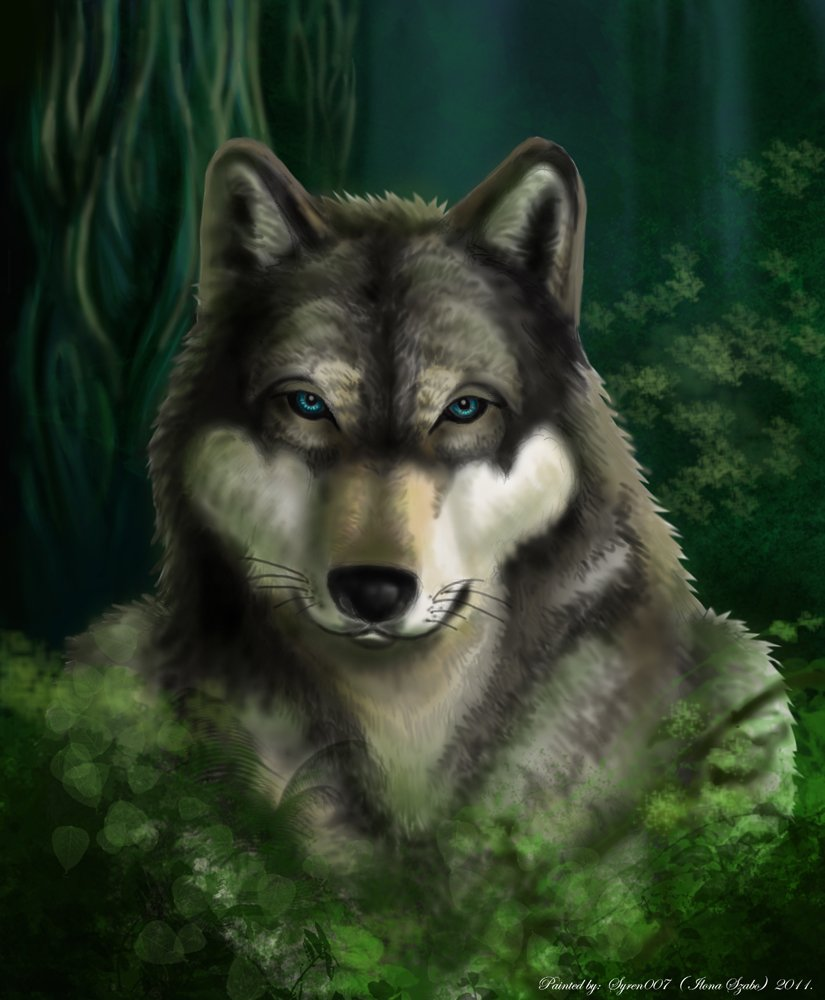 grey_wolf_in_the_dark_forest_by_syren007-d3b4qxy.jpg